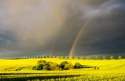 在年轻玉米的领域的彩虹 图库摄影