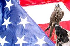 在经理手上的猎鹰在美国旗子 库存图片