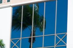 在玻璃反映的棕榈树 免版税库存照片