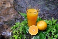 在玻璃和新鲜水果的橙汁在与蕨叶子的一块石头 库存图片