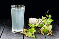在玻璃和桦树的新鲜的桦树汁液分支 库存图片