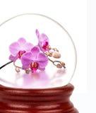 在玻璃球的自然 在山背景的番红花  库存图片