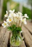 在玻璃瓶子的白色银莲花属在老长木凳 库存照片