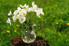 在玻璃瓶子的白色银莲花属在草甸copyspace的老树桩 库存图片
