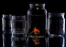 在玻璃瓶子的鱼 图库摄影