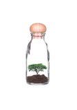 在玻璃瓶种植的树 免版税库存照片
