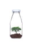 在玻璃瓶种植的树 库存照片