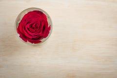 在玻璃的一朵红色玫瑰 免版税库存照片