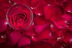在玻璃的一朵红色玫瑰 免版税库存图片