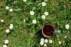 在玻璃的咖啡在草甸 库存照片