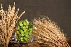 在玻璃的啤酒花球果树用大麦 免版税图库摄影