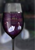 在玻璃的天鹅 库存图片
