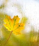 在玻璃的枫叶用自然水滴下 库存照片
