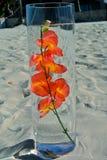 在玻璃的橙色兰花 免版税库存图片