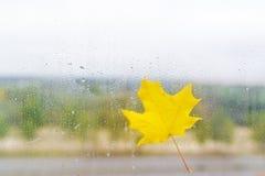 在玻璃的秋天黄色枫叶用水滴下 免版税库存照片