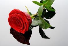 在玻璃的红色玫瑰 免版税库存图片