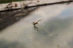 在玻璃的蜘蛛 库存照片