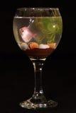 在玻璃的鱼 免版税库存图片