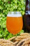 在玻璃的麦子啤酒 免版税库存图片