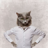 在玻璃的滑稽的蓬松猫。在灰色的拼贴画 库存图片
