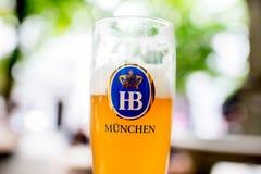 在玻璃的Hofbrauhaus啤酒 库存照片