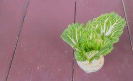 在玻璃种植的大白菜 免版税库存照片