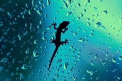 在玻璃窗的壁虎湿与雨下落 免版税库存图片