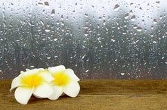 在玻璃窗背景的雨下落与木表 图库摄影