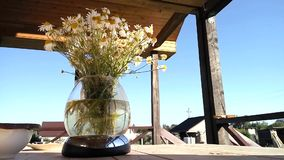 在玻璃花瓶吹的风的室外camomiles 股票录像