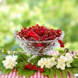 在玻璃花瓶和茉莉花的红浆果开花 背景被弄脏的绿色 库存图片