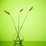 在玻璃花瓶的麦子耳朵在绿色 免版税库存图片