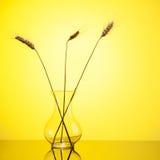 在玻璃花瓶的麦子耳朵在黄色 库存图片