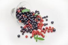 在玻璃花瓶的黑和红浆果在白色背景 免版税库存图片