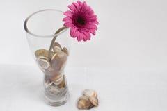 在玻璃花瓶的紫色花 库存照片
