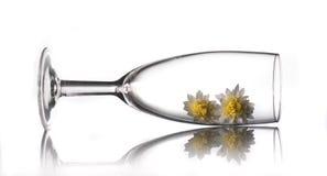在玻璃里面的两朵花 免版税图库摄影