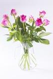 在玻璃水罐的桃红色玫瑰在白色背景 免版税图库摄影