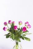 在玻璃水罐的桃红色玫瑰在白色背景 免版税库存图片