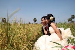 在稻田的婚礼夫妇 库存图片