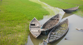 在稻田的小船 库存图片