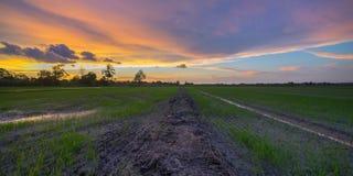 在稻田的日落 库存图片