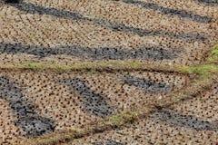 在稻田的样式 库存图片