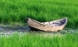 在稻田的老木小船 免版税库存照片