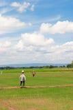 在稻田的稻草人。 库存照片