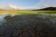 在稻田的破裂的土壤 免版税库存图片