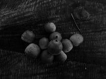 在黑白图象的橡子橡木 库存图片