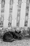在黑白的一只特别严肃的猫 免版税库存照片