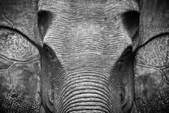 在黑白的大象头 免版税库存图片