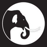 在黑白的大象头 免版税库存照片