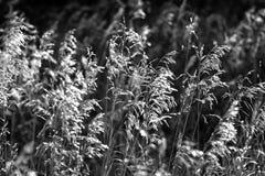 在黑白的干草原 库存图片