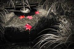 在黑白的日本tsukubai水盆与在红色秋天槭树的被隔绝的颜色离开 免版税库存图片